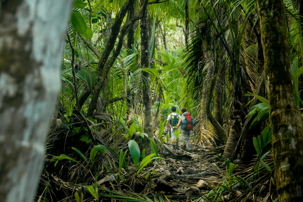 jungle tours in costa rica